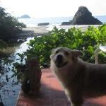 lucie my dog happy to be here