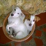 Las mascotas de la posada