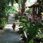 the secret garden!!!