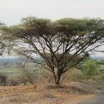TUNDRA - Chobe National Park