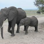 MUM & BABY ELEPHANT - Chobe National Park