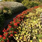 Bright Invercargill flowers