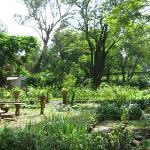 The gorgeous garden