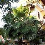 Appartamenti che hanno sulla baia di Episcopos.