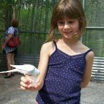feeding budgie (parakeet)
