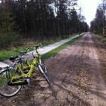 Great bikes for rent! Recommended