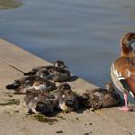 birds at Hayarkon Park