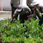 The Inn Organic Garden