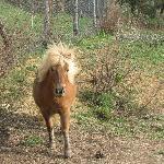 Pony del centro vacanze