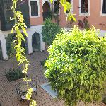 View of the orange tree courtyard from our window