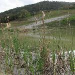 Vista da uno dei laghetti