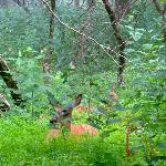 Deer outside our tent