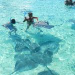 Snorkeling avec les raies et les requins
