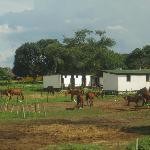 Horses near by