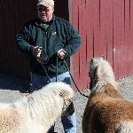 Mark with the Miniature Horses (Gail and Bob)