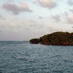 Everglades' Bird Sanctuary