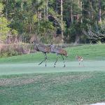 Rosen Shingle Creek Pictures