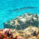 snorkeling @ blue hole