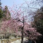 川沿いの桜もとてもきれい