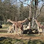 nurnberg zoo