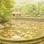 Pond at Hoa Lu Temple