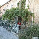 The Sultan vine Yard