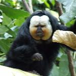 Rainforest Pyramid - monkey studies dad as we study monkey!
