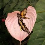 Mariposas en Mindo