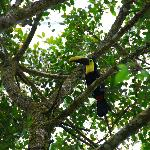 Ana located a toucan for us on grounds