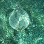 Mademoiselle la tortue