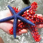 Coral Reef Beach Resort Foto
