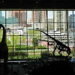 Science Museums Dinosaur Exhibit Area