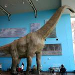 A Full Size Dinosaur Mock-Up