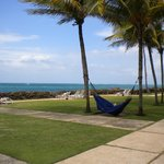 grassy area of hotel with hammocks