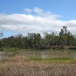 The Back dam full of ducks