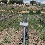 Wine fields