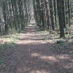 Path leading to the fishing pond