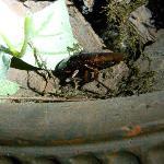 dead roach in planter