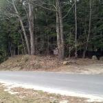 Entrance off Buffalo Rd. 1.5 miles after the rock climbing parking lot.  ,6 mile after Cutting G