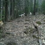 A stream on the left gives the dogs a drink the first 1/3 of the hike.