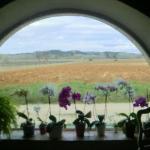 Vue sur les vignes