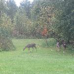 Deer on our 10 acre park  setting