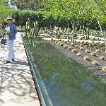 Sunnylands reflecting pool