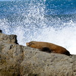 Seal and spray