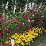 My Parents Flower Garden