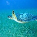 Iyanola Dive Ventures Sea Life