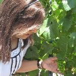 Guest can enjoy taking photos in the Vineyard
