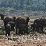 Elephant Reservation