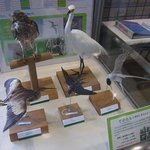 Abiko city Museum of Birds