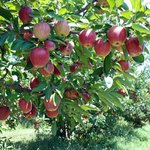 Dougherty Orchards